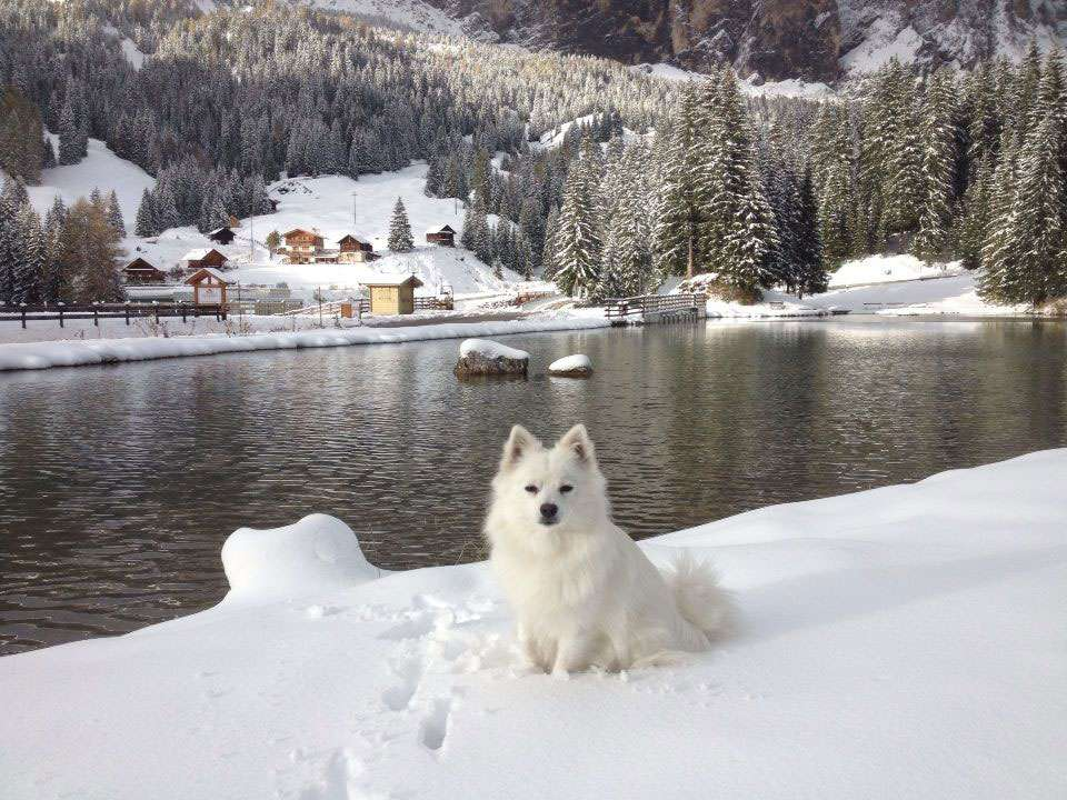 Winter holidays with dog!